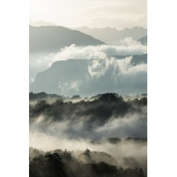 Entre la brume