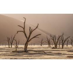 Forêt Morte